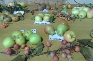 mostra pomologica pere e mele